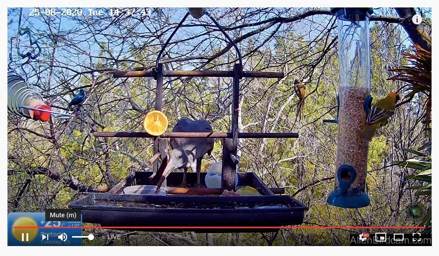 Great Birdcam