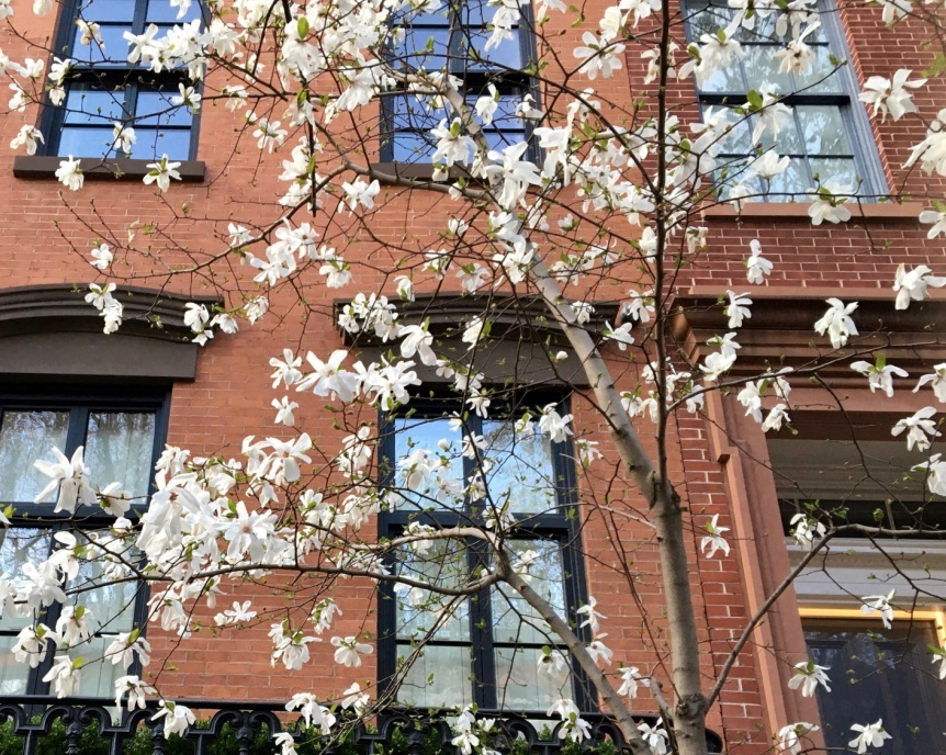 Spring in the West Village, New York City