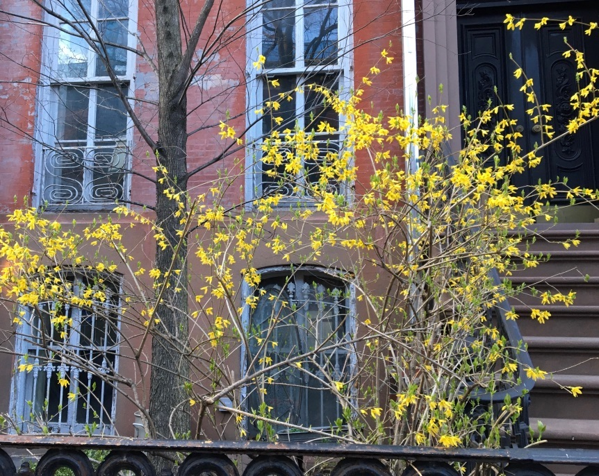 Spring, West Village, New York City
