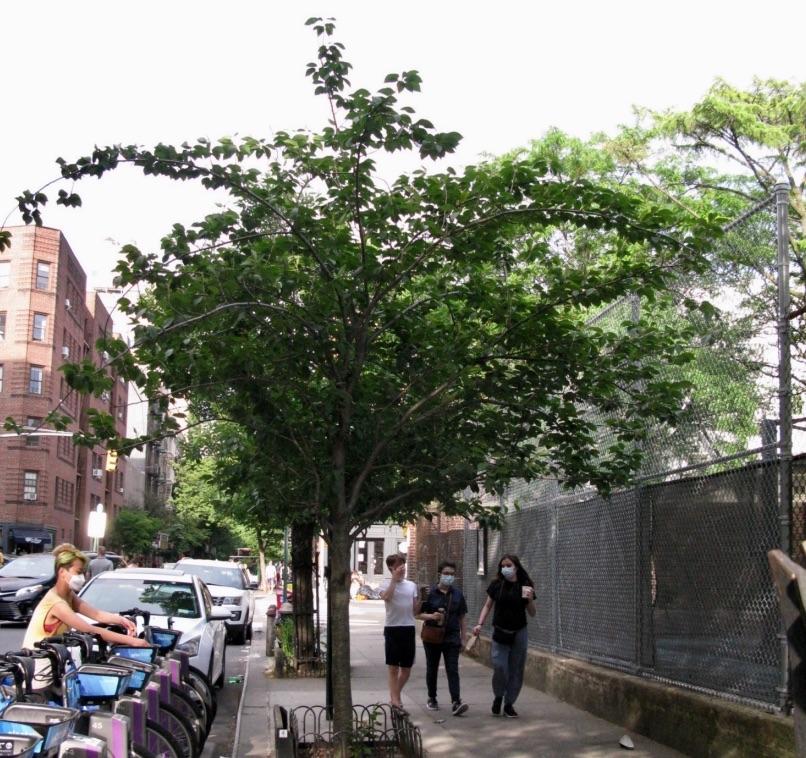 Amy Covey Memorial Treet, Christopher Street, Greenwich Village, New York City